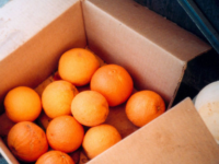 Box Of Oranges Lomo
