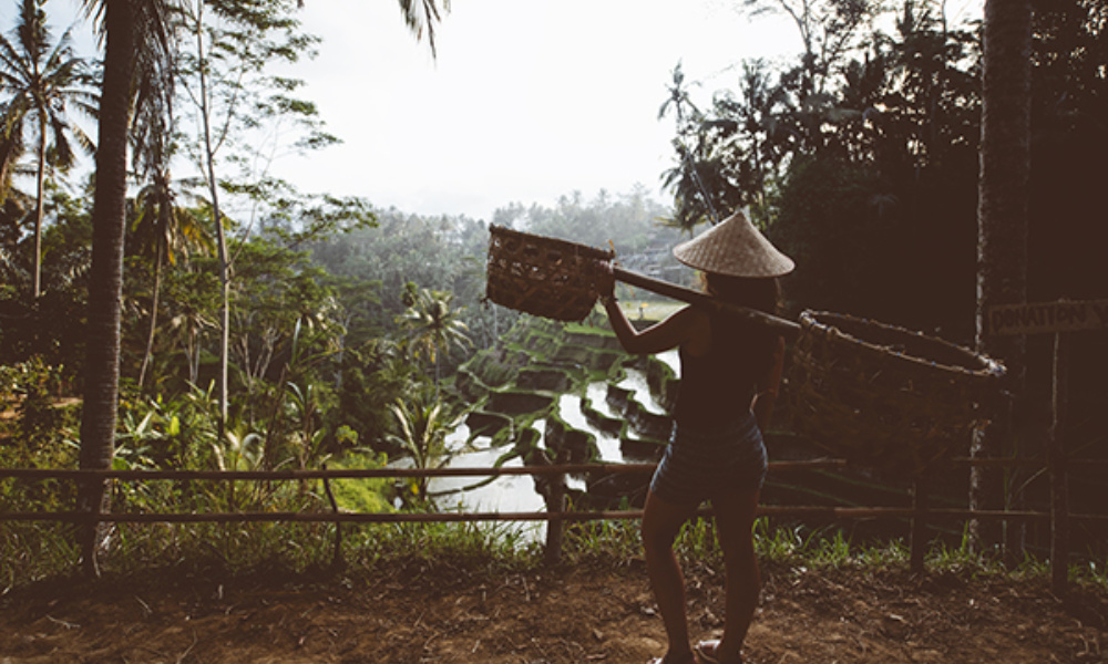 Agriculture Woman Carrying Tools On Rice Terraces P4 Tx759@01X